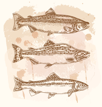brown trout: Hand drawn fish set. Vector illustration in sketch style. Illustration