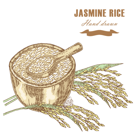 thai style: Thai jasmine rice in a bowl. Rice plant hand drawn. Vector illustration in sketch style isolated Illustration