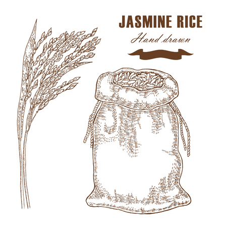 Thai jasmine rice in sack. Rice plant hand drawn. Vector illustration in sketch style Ilustração
