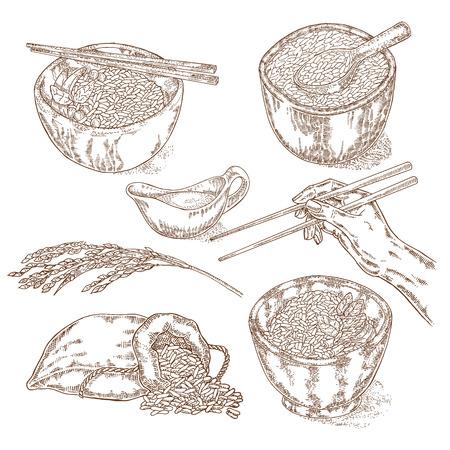 jasmine rice: Hand drawn rice set. Vector illustration in sketch style