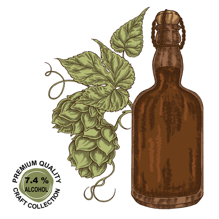 Hand drawn beer bottle with hops plant. Alcohol drink sketch vector illustration