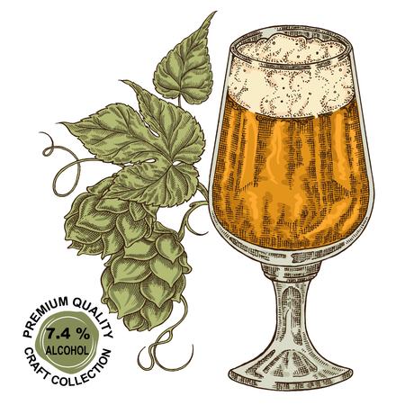 Hand drawn beer glass with hops plant. Alcohol drink sketch vector illustration