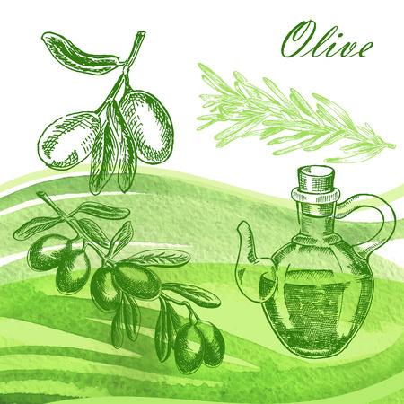 Hand drawn olive twig with jar and rosemary on watercolor background. Vector illustration