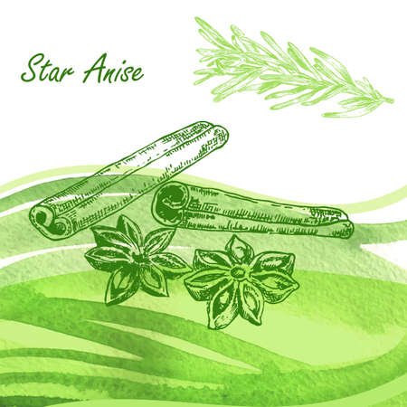 star anise: Kitchen herbs. Hand drawn star anise and rosemary on watercolor background. Vector illustration