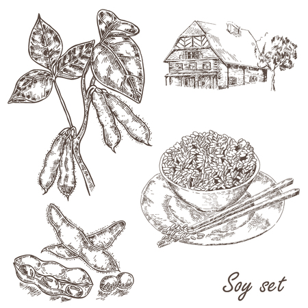 Hand drawn soy plant, soy bean, rice and old house. Vector illustration