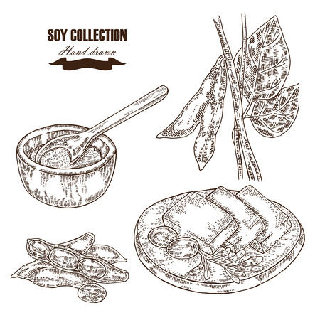 tofu: Hand drawn soy plant, soybeans and tofu. Vector illustration Illustration