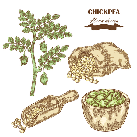 Hand drawn chickpea plant. Wooden scoop, sack and plate with pea. Vector illustration