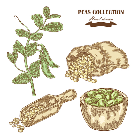 Hand drawn peas plant. Wooden scoop, sack and plate with pea. Vector illustration