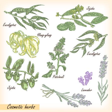 australian culture: Cosmetic herbs vector set