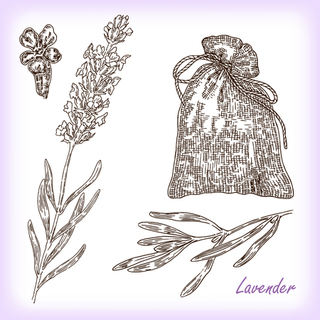 Collection of hand drawn plant lavender. Vector illustration in sketch style
