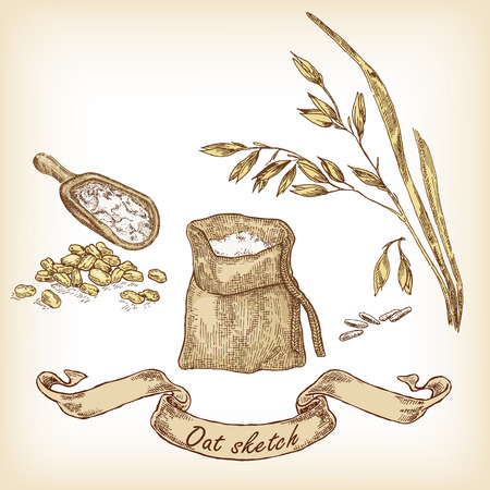 oat field: Bakery sketch. Hand drawn illustration of oats and grain