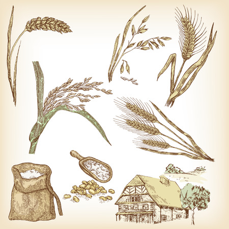 Cereals and farm house vector.