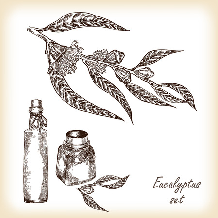 eucalyptus: Eucalyptus branch with glass bottles hand drawn vector illustration in sketch style