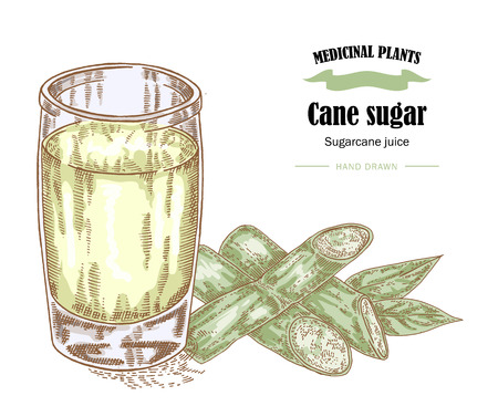 Cane sugar and raw cane juice illustration. Hand drawn medicinal plants and healthy food in sketch style