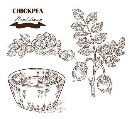in peas: Hand drawn chickpea plant. Seeds, chickpea leaves and plate with pea.