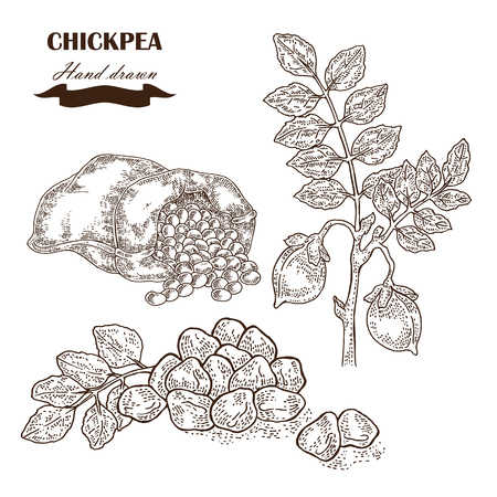 Hand drawn chickpea plant. Seeds, chickpea leaves and sack with pea.