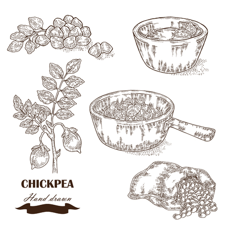 Hand drawn chickpea plant. Seeds, chickpea soup, sauce and sack with pea. 免版税图像 - 67610206