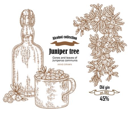 Juniper tree en oude fles gin vectorillustratie. Kegels en bessen van Juniperus communis. Hand getrokken alcohol ingesteld in schets stijl