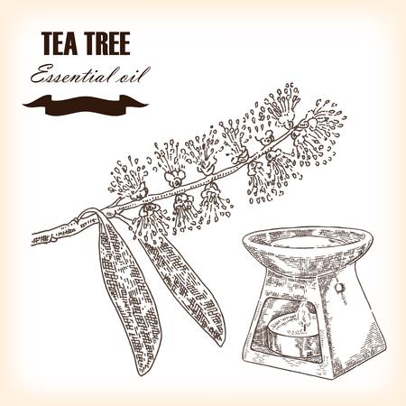 Melaleuca hand drawn tea tree essential oil vector illustration. Illustration