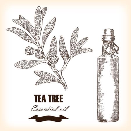 Melaleuca hand drawn TeaTree essential oil.