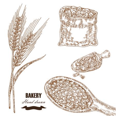 Cereals set. Hand drawn sketch illustration wheat, barley, grain in vintage style. Isolated Stok Fotoğraf - 76542363