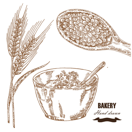 Cereals set. Hand drawn sketch illustration wheat, barley, breakfast in vintage style. Isolated Ilustração