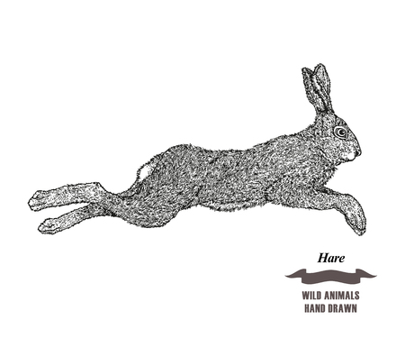Forest animal jumping hare or rabbit.
