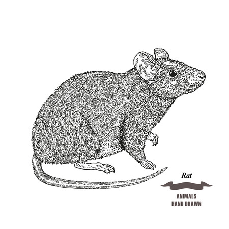 Hand drawn mouse or rat animal.