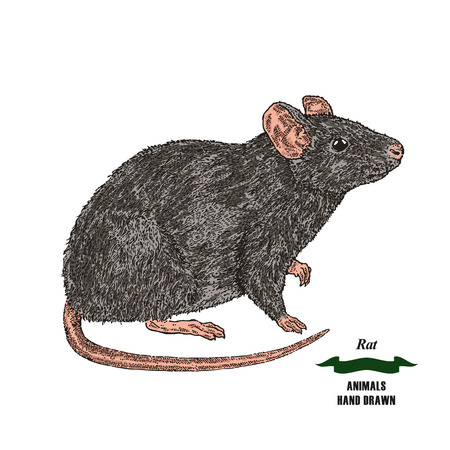 Hand drawn mouse. Illustration