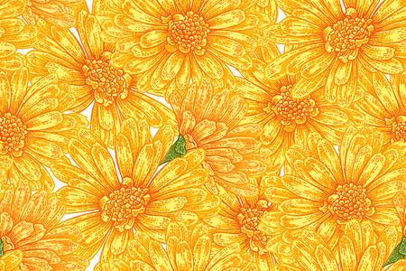 Seamless botanical pattern with calendula flowers. Vector illustration vintage