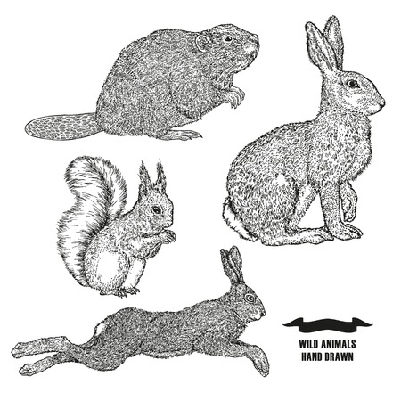 Forest animal hare, rabbit, beaver and squirrel. Hand drawn black ink sketch on white background. Vector illustration engraving style.
