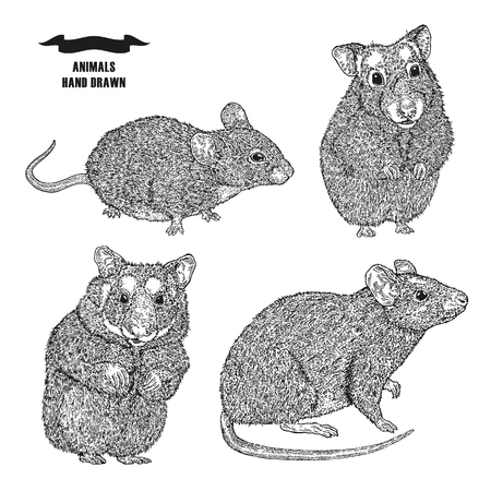 Hand drawn rat, mouse and hamsters. Black ink sketch animal on white background vector illustration engraving style.