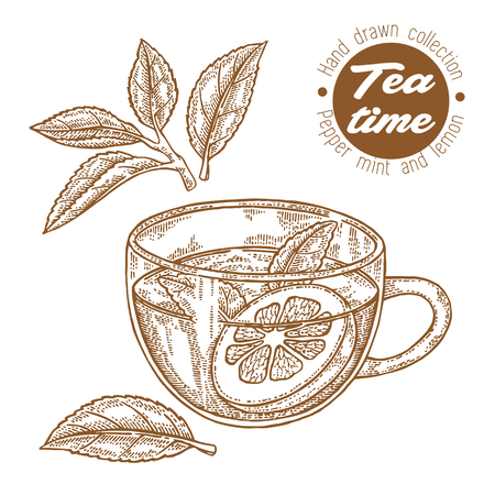 Hand drawn cup of tea. Herbal tea with lemon and mint isolated on white. Vector illustration engraved. Design for packaging. Illustration