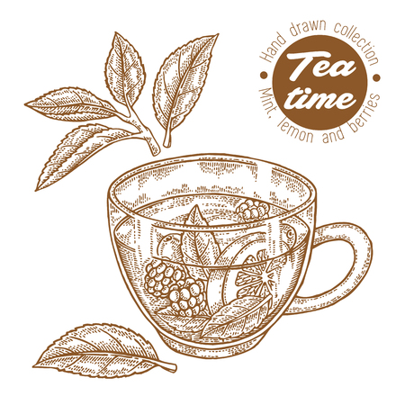 Hand drawn cup of tea. Herbal tea with lemon, mint and raspberry isolated on white. Vector illustration engraved. Design for packaging.