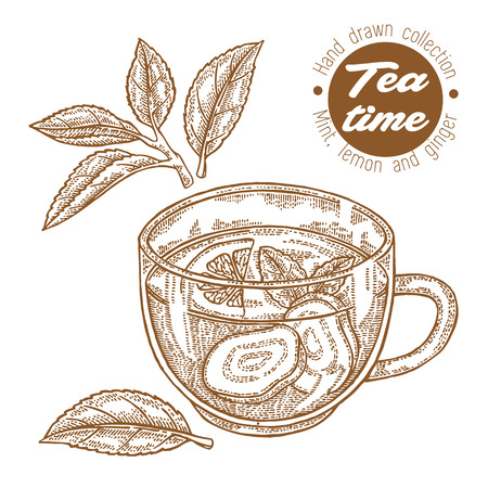 Hand drawn cup of tea. Herbal tea with lemon, mint and ginger isolated on white. Vector illustration engraved. Design for packaging.