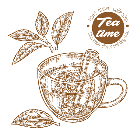 Hand drawn cup of tea. Herbal tea with cinnamon, clover and dog rose isolated on white. Vector illustration engraved. Design for packaging.