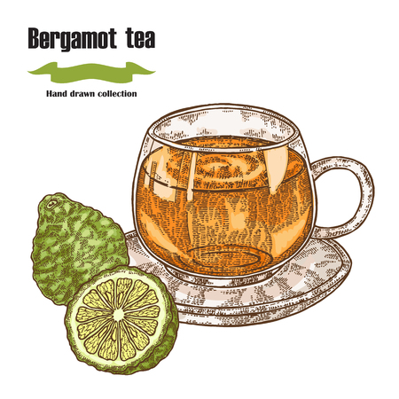 Bergamot fruits and cup of tea isolated on white background. Hand drawn art vector illustration.