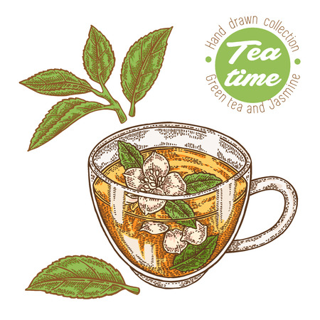 Hand drawn cup of tea. Green tea and jasmine isolated on white. Vector illustration. Design for packaging.