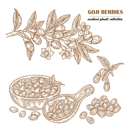 Goji berries on a branch. Hand drawn medical plant collection. Vector illustration engraved. Illustration