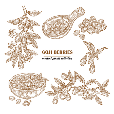 Set Goji berries on a branch. Hand drawn medical plant collection. Vector illustration engraved. 免版税图像 - 100032974