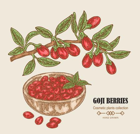 Hand drawn Goji berries on a branch. Colored sketch goji. Vector illustration vintage.