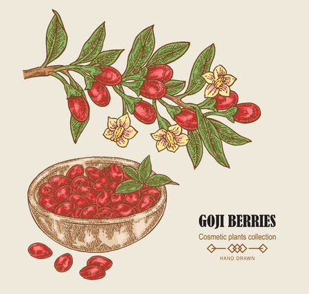 Hand drawn Goji berries on a branch. Colored sketch goji. Vector illustration vintage.