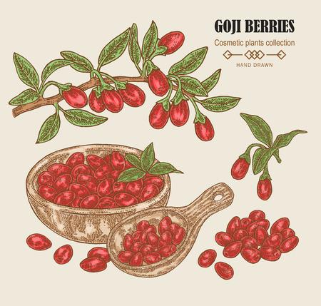 Hand drawn Goji berries on a branch. Colored sketch goji. Vector illustration vintage. Stock Vector - 100118968