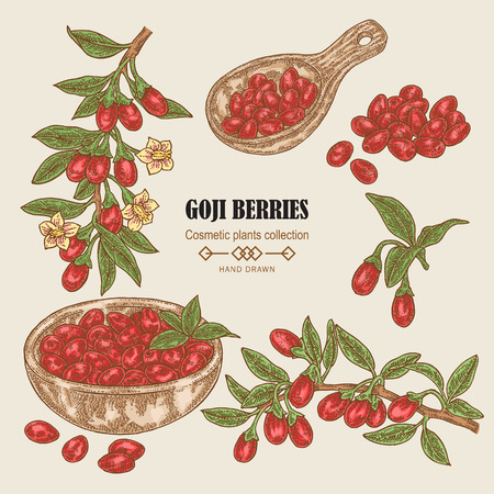 Hand drawn set of Goji berries. Colored sketch goji. Vector illustration vintage.