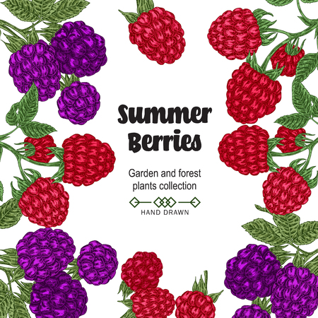 Summer berries border with a white background 矢量图像