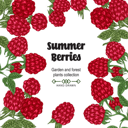 Hand drawn background with summer berries. Raspberry branches isolated on white. Vector colored sketch illustration. 免版税图像 - 100261980