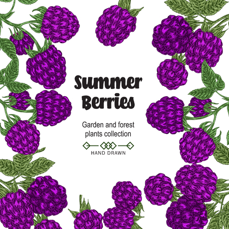 Hand drawn background with summer berries. Blackberry branches isolated on white. Vector colored sketch illustration.