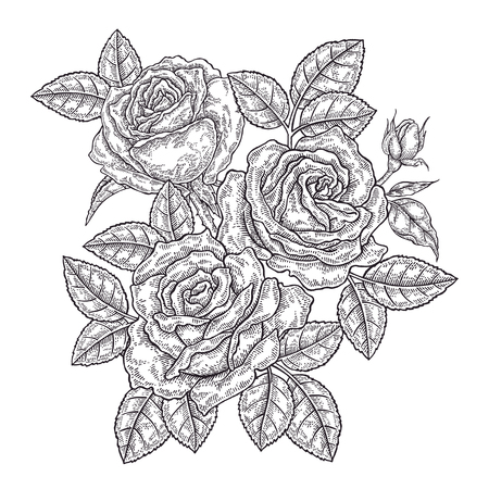 Hand drawn rose flowers and leaves. Vintage floral composition. Spring garden flowers. Vector illustration in engraved style. 免版税图像 - 102764032
