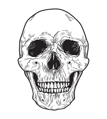 Human skull . Black and white hand drawn illustration. 免版税图像 - 105141345