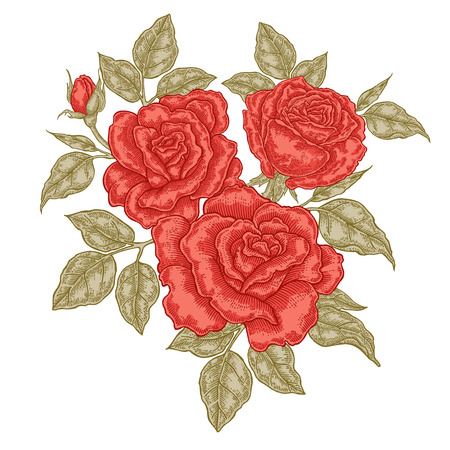 Hand drawn red roses flowers and leaves. Vintage floral composition. Spring garden flowers isolated. Vector illustration. 免版税图像 - 114801184